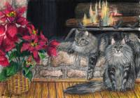 Maine Coon Cat Christmas