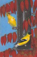 Goldfinches and Burning Bush