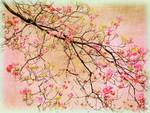 Dogwood Canvas