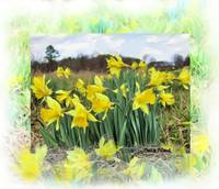 Daffies-_Painting