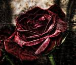Red Textured Rose