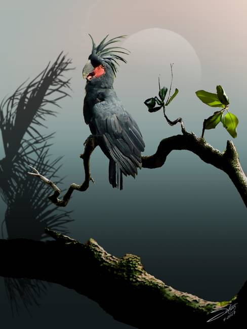 Stunning Quot Palm Cockatoo Quot Artwork For Sale On Fine Art Prints