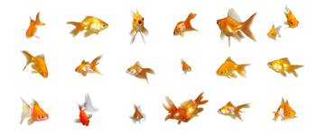 Goldfishes Set 4