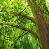 Tree, Branches, Leaves Art Prints & Posters by Geoff Howard