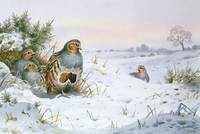 Grey Partridge by Carl Donner