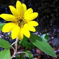 Spring Flower by Barbara Wilford Gentry