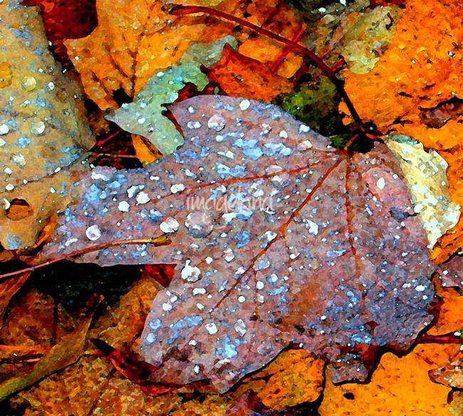 Rainsoaked Leaves