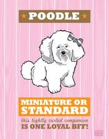 Poodle Pink/Orange