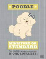 Poodle3 Gray/Gold