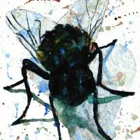 A fly on my Canvas! Art Prints & Posters by Miriam Schulman