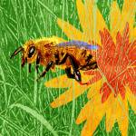 Honey Bee Prints & Posters