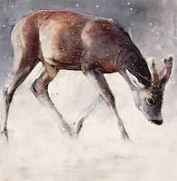 Roe Buck, Winter by Mark Adlington