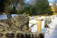 Snow Leopard - Clean up