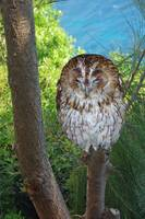 Owl - hey! I'm Sleeping