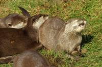 Otter Group