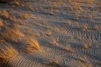 Early Evening Beach Grass