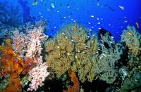 Bali Black and Soft Coral