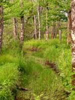 Cranberry Glades Botanical Area