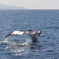 Whale Tail and Island by Eileen Ringwald