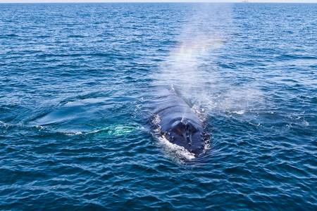 Rainbow Hello from a Humpback Whale