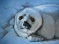 closeup of sealpup