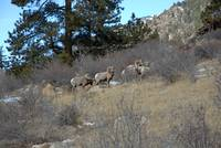 Bighorn Diners
