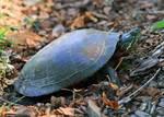 Turtle by Karen Adams