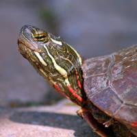 Turtle Eyes by Karen Adams