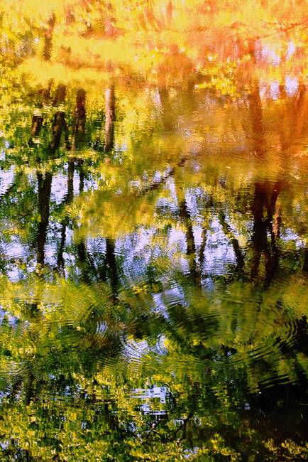 Piscataquog River Reflection l