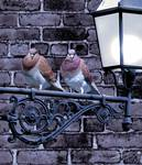 Pigeons on Lamp Post