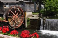 Old Mill Pigeon, Forge TN168