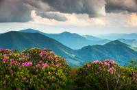 Blue Ridge Appalachian Mountains Spring Flowers