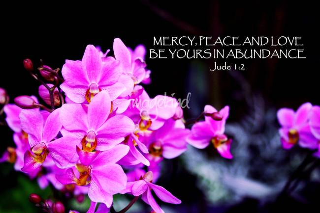 Mercy and Love, Flower Orchid
