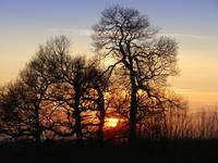 Sunset behind tree silhouettes