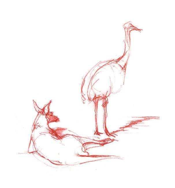 Emu and Roo