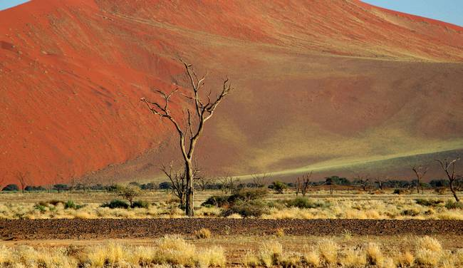Sossusvlei after the rain 2