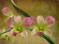 Pink and Green Beauty by Giorgetta Bell McRee