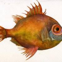 Boar Fish Art Prints & Posters by Miriam Nerlove