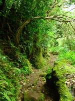 Hawaiian Hiking Trail