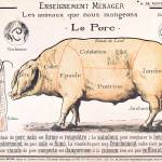 """Cuts of Pork, illustration from a French Domestic"" by fineartmasters"