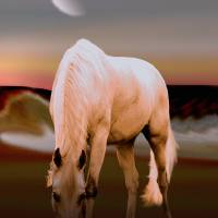 Horse at Sundown by I.M. Spadecaller