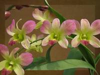 Beauty in Pink and Green by Giorgetta Bell McRee