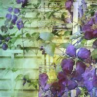 Clematis Trellis by Faye Cummings