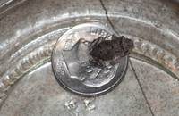 frog with dime-001-1935-1260