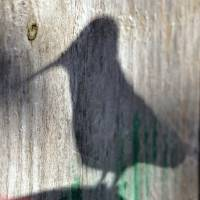 Hummingbird Shadow Silhouette by Laura Mountainspring