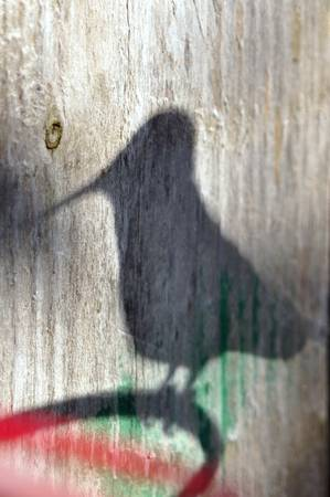 Hummingbird Shadow Silhouette