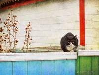 cozy cat on a colored fence