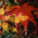 Maple and Sassafras by Deanne Flouton