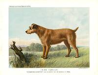 cass.irish.terrier
