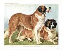 cass.rough.coated.st.bernard